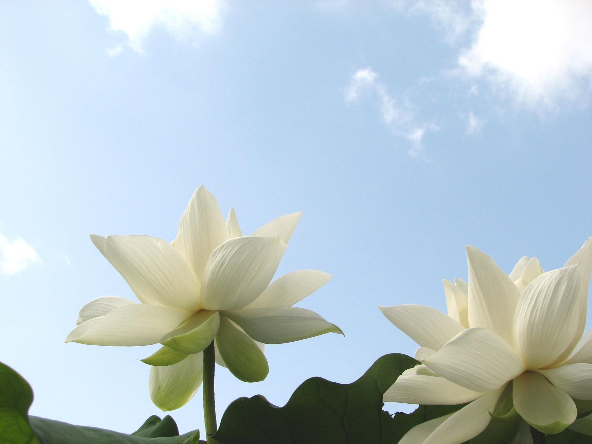青い空に白い花イメージ写真